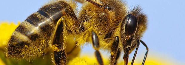 Začíná včelí rojení